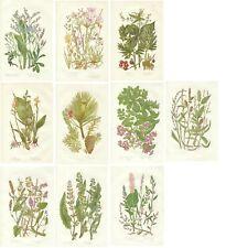 Stampe antiche SERIE 10 FIORI DI CAMPO in OFFERTA botanica 1899 Antique print