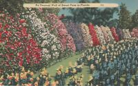Unusual Wall of Sweat Peas in Florida Old Vintage Linen Postcard *Free Shipping*