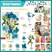Real Pressed Dried Flowers DIY Epoxy Resin Filling Aromatherapy Home Art Acc |US
