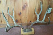 Vintage Mule Deer Antlers 4X4