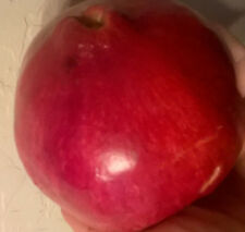 Pomegranate Parfianka  fresh cuttings, 5 cuttings, very TASTY
