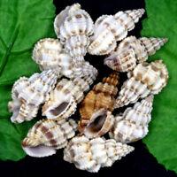 8pcs Natural Beautiful top rare real sea Shell Conch aquarium YBK233