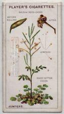 Hairy Bittercress Cardamine hirsuta Bitter Herb 90+ Y/O Trade Ad Card