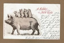 A Happy New Year, used 1905, large Sow pig, with 4 baby pigs piglets on back