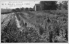Postcard W.F. Bole's Dahlia Flower Farm in Ada, Michigan~119054