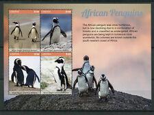 Liberia 2017 MNH African Penguins 4v M/S II Penguin Birds Stamps