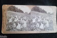 STA693 Scène de Genre Fillete champs fleurs albumen STEREO Photo stereoview 1900