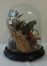 Vintage Victorian Style Green Parakeet Taxidermy Display Under Glass Dome