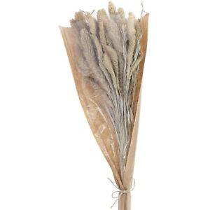 Trockenblumen Setaria Bund 100g Naturbelassen NEU