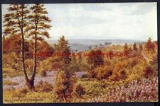 The Golden Valley, HINDHEAD, Sry. QUINTON Vintage Art Postcard, circa 1930s/1940