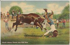 Charlie Johnson Thrown From Wild Steer Cowboy Rodeo Western Postcard