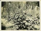 Japan Army old photo Imperial 1942 Pacific War Military Soldier garden plant