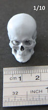 1:10 scale Custom resin anatomical Skull accessory for miniatures & sculpting