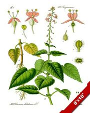 ENCHANTERS NIGHTSHADE HERB PLANT ILLUSTRATION PAINTING ART REAL CANVAS PRINT