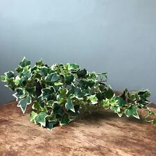 Potted Artificial Trailing Variegated Ivy Plant. Realistic Green Faux Houseplant