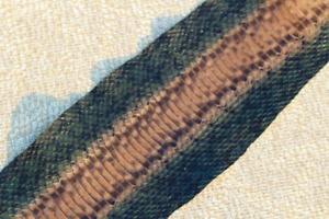 Asia Elaphe Snake Skin Back Hide Leather Snakeskin Craft Supply Glossy Olive