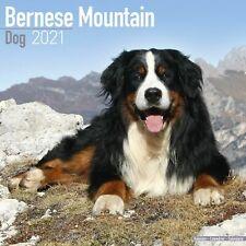 Bernese Mountain Dog Calendar 2021 Premium Dog Breed Calendars