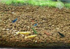Gambas Neocaridinas Azul - Amarilla - Roja - Negra 20Ud Para acuarios agua Dulce
