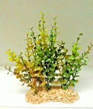 """Moneywort Aquarium Plant Heavy Rock Base Plants 9"""" x 8"""" x 4"""""""