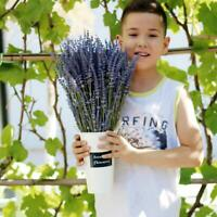 1 Bunch Lavender Natural Dried Flower Best Gift Plant Grass Decor H8G4