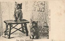 1914 Wrench Series, TWO LITTLE VAGABONDS KITTENS CATS POSTCARD - sent Hastings
