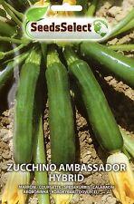 30 Semi/Seeds ZUCCHINO Ambassador Hybrid