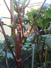 BURGUNDY Okra/Lady's Finger - BULK 100 Seeds - A Super High Yield Variety