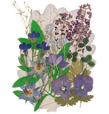 Real pressed flowers, lobelia pansy alyssum shamrock borage, forget me not
