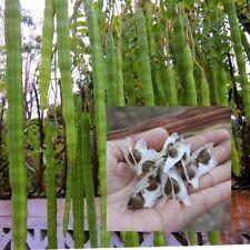 Moringa Oleifera 100 Seeds,Plants Seeds,Drumstick Tree From Thailand