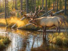 ELK ART PRINT - Bully Bully by Greg Alexander Wildlife Hunting Poster 18x24