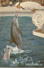 Marineland Of The Pacific Palos Verdes CA Zippy The Dolphin Postcard 1950s