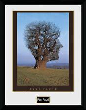 Pink Floyd árbol Montado & Enmarcado impresión