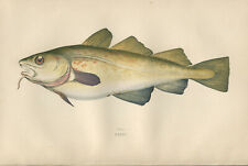 """1877 Couch's """"COD""""  Sea Fishes - Beautiful Hand-Coloured Fish Lithograph Print"""