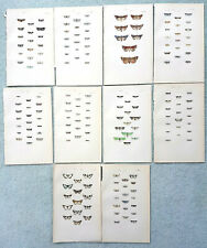 1872 Antique prints of British moths x 10 Rev Morris Lithograph Entomology Lot 5