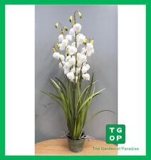"Shipping Australian Wide A0191 36"" Artificial Fake Plant Lantern Flower Grass"