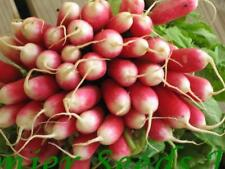RADISH FRENCH BREAKFAST 2   45 GRAM ~ APPROX 6300 FINEST SEEDS