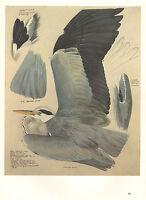VINTAGE BIRD PRINT ~ HERON