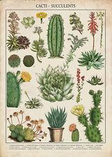 Vintage Botanical Art Posters for sale | eBay
