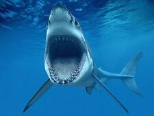"Great White Shark  Mini Poster 24"" x 16"""