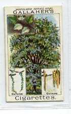 (Jc1911-100)  GALLAHERS,WOODLAND TREES,THE WHITE POPLAR,1912#85