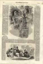 1861 schizzi in South Carolina, la vendita di patate dolci per Charleston