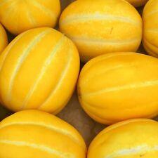 (15) Korean Musk Melon Seeds 2019 Harvest Usa Shipped