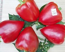 Sweet Pepper seeds vegetable Veronica seeds average / 50 seeds