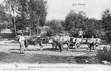 VOSGES (88) attelage de boeufs transport des pavés de granit beau plan