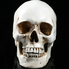 Lifesize Human Skull Replica Resin Model Anatomical Medical Skeleton