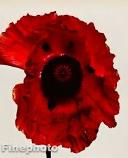 1980 IRVING PENN Vintage Botanical RED POPPY War Lord FLOWER Photo Art 12X16