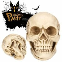 Lifesize Resin Human Skull Head Haunted House Decoration Horror Halloween Prop