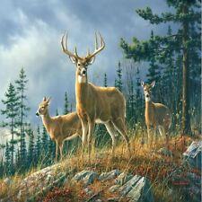 W + g Mural otoño Whitetails Ciervo Foto Poster Papel Tapiz Decoración Arte 366x254cm
