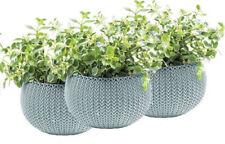 Pots de fleurs bleus pour plante