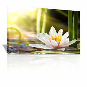 Water Lily floral nature canvas print - C032